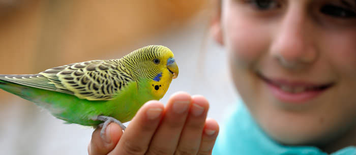 ce animal e bun pentru copilul tau - papagal