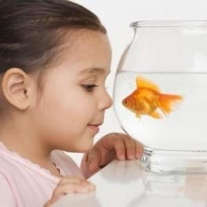ce animal e bun pentru copilul tau - peste