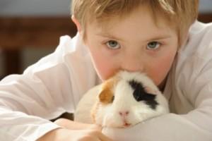 ce animal e bun pentru copilul tau -porc de guineea