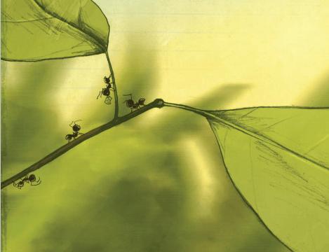 Bondarel-invata-sa-zboare-5